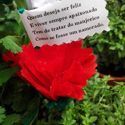 """Le 13 juin, jour de la Saint Antoine et des """"Manjericos"""" à Lisbonne"""