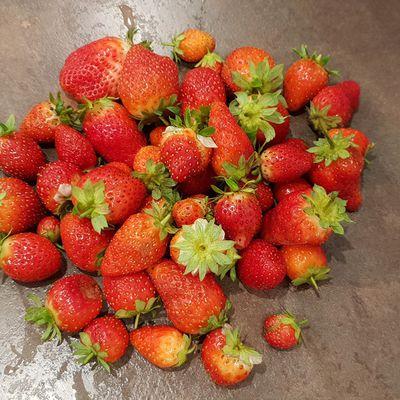 4ème session de fraises en octobre