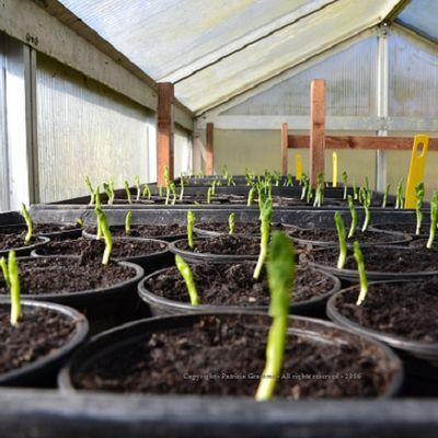 Demain, retrouvez-moi, pour l'atelier permaculture - Débat citoyen «Réaliser ses semis de légumes, pour une alimentation saine et variée. »
