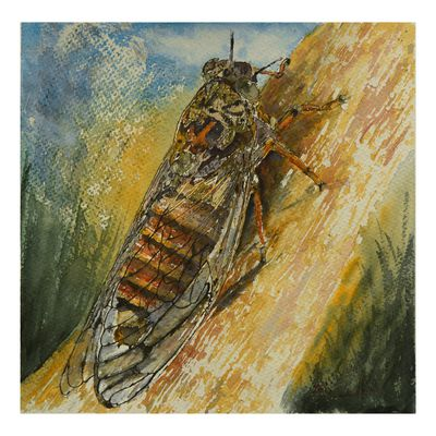 Cigale en Provence - Cicada in Provence