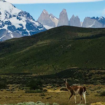 Puerto Natales y Torres de Piane