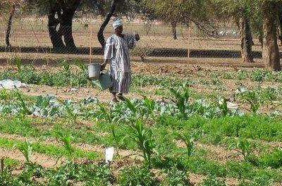 Agroécologie - le GTAE propose les actes de son dernier atelier.