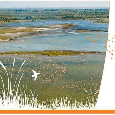 les zones humides (par zaghouani Bouali)