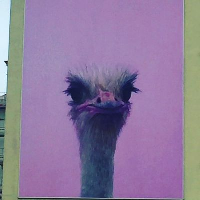 Graffiti n°17 : Purple Ostrich (Montreuil)