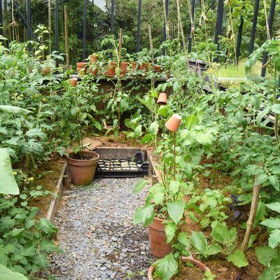 Des nouvelles : poivrons, aubergines, tomates, etc. dans la serre