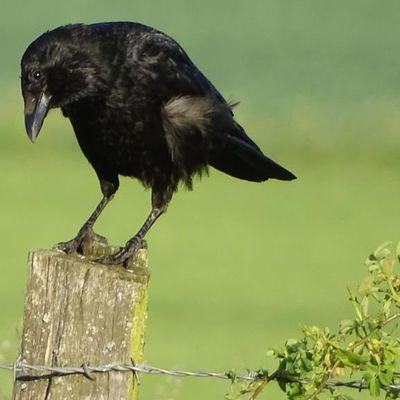 Victoire juridique : Le Conseil d'État annule le classement de certaines espèces « nuisibles »