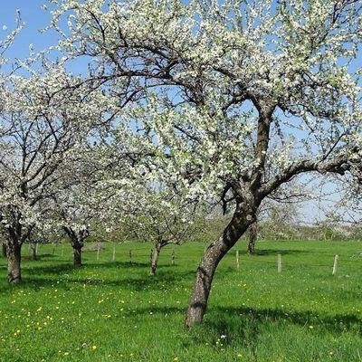 Trame verte écologique aux Pays de Sarrebourg et du Saulnois