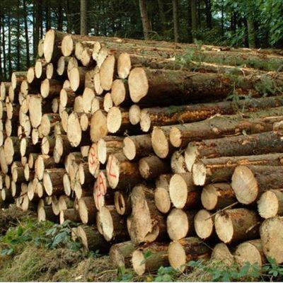 RCA : Les vendeurs de bois à Bangui en grève