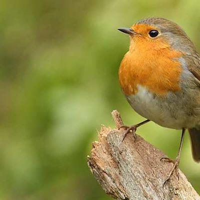 écoutez comme on écoute le chant des oiseaux