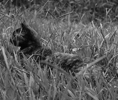 Un pacte original entre un maraîcher et des chats...