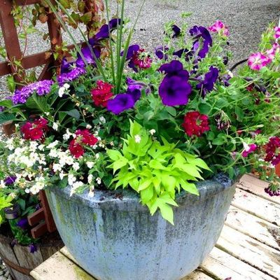 Potted plants in Summer