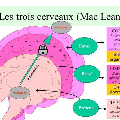 Les 3 cerveaux, la posture et la motricité