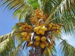 Confiture À La Noix De Coco Et Jus De Pommes