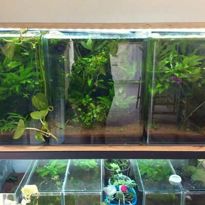 Low Tech Aquarium Betta : le TUTO !