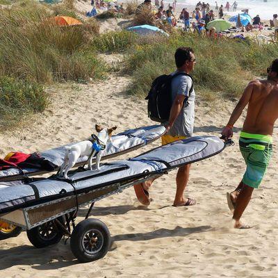 22 août. Petit chien va faire du surf! Plage de Grand-village.