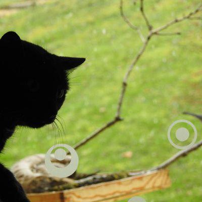 Chats et oiseaux : les conseils de la LPO