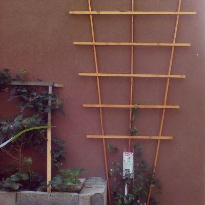 Bricolage d'un treillis en bois pour faire courrir le jasmin étoilé