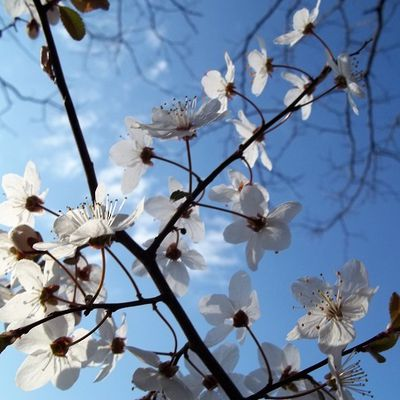 Douceur printanière. Spring sweetness.