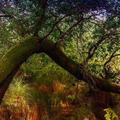 Land'arbres
