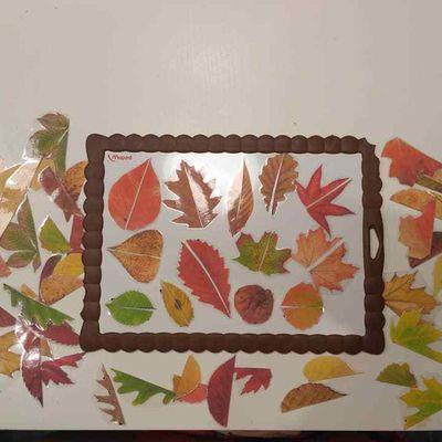 Jeu d'observation : les demi-feuilles !