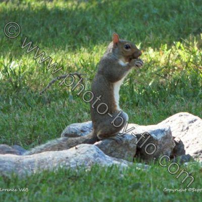 Squirrel sitting on a rock
