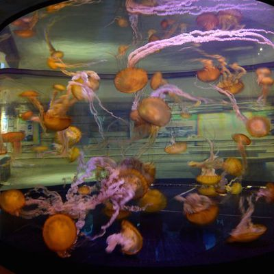 Comment pirater un Casino avec un Aquarium connecté :-)
