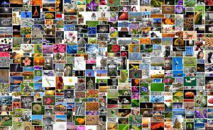 Banques d'images utilisables en classe à des fins pédagogiques