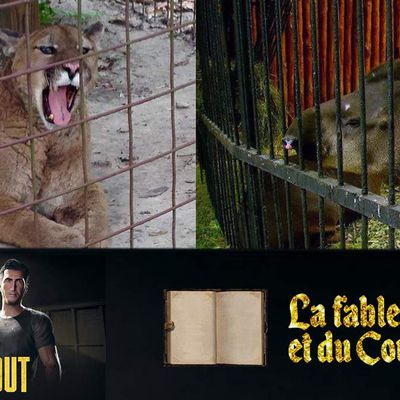 La Fable du Tapir et du Couguar - A WAY OUT SCÉNAR RATÉ