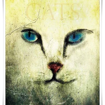 Affiches-Posters Cats