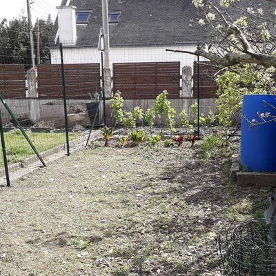 Préparation et Nettoyage du terrain pour les pommes de terre sur gazon