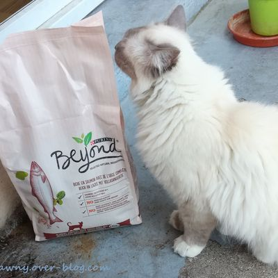 Purina Beyond - Nouvelle campagne