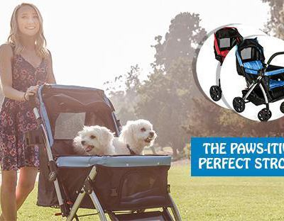 Brighten Your Pet's Day with the Finest Pet Carrier