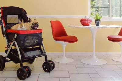 Find the Perfect Pet Stroller for Your Pets