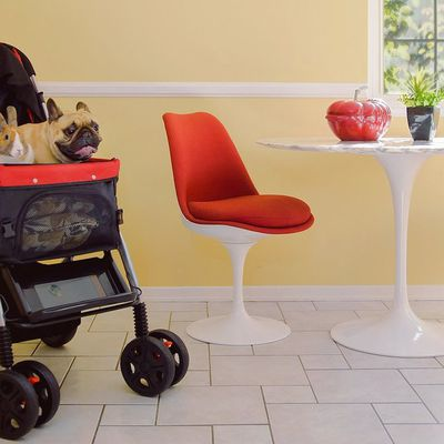 Planning to Buy a Pet Stroller? Read Details Here!