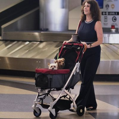 Know the Right Way of Buying Pet Strollers