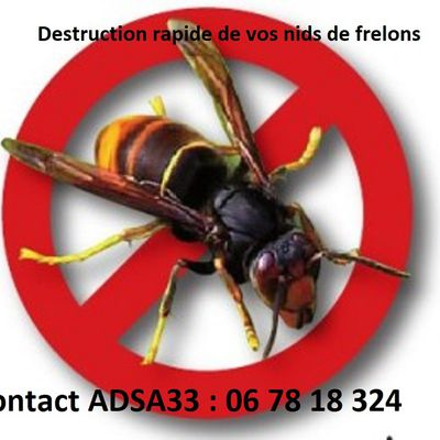 Urgent destruction de nids de frelons