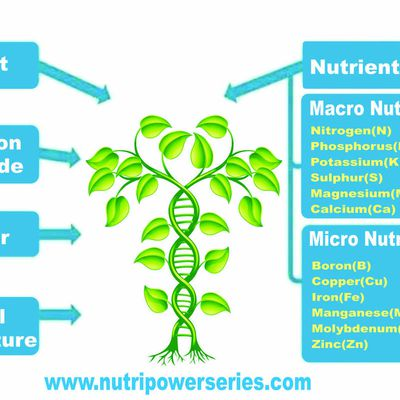 Requirements of Growing Plants