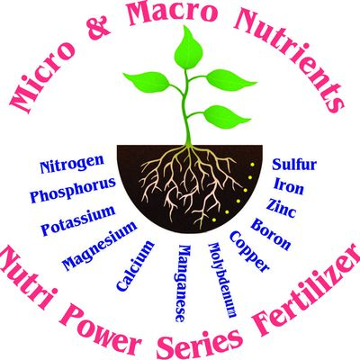 macro and micro nutrients