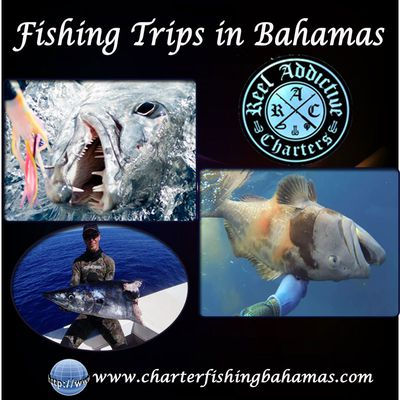 Fishing Trips In Bahamas | Book Today