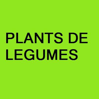 PLANTS DE LEGUMES
