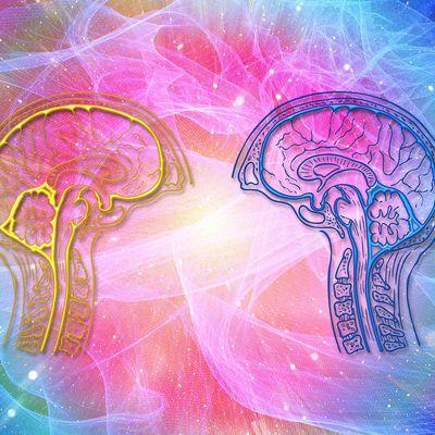 Travail de la mémoire et cognition