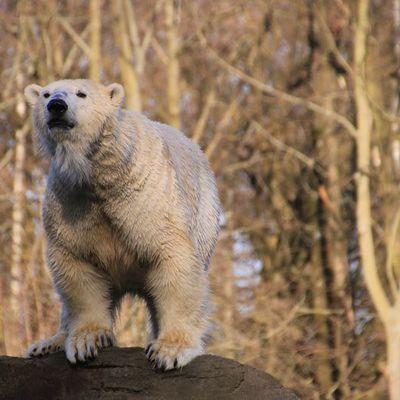 Besuch Tierpark Friedrichsfelde 15.02.2020
