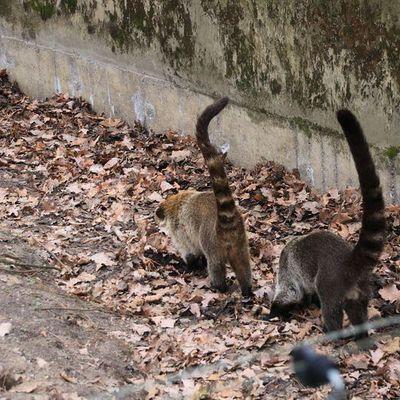 Besuch Zoo Berlin am 22.02.2020
