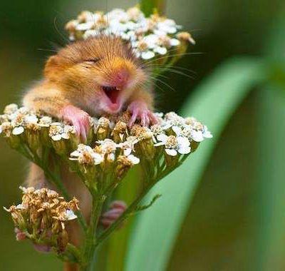 24 photos hilarantes d'animaux.........................................