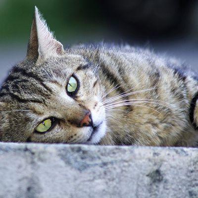 4 000 chats stérilisés grâce à la Fondation 30 Millions d'Amis au premier semestre 2020