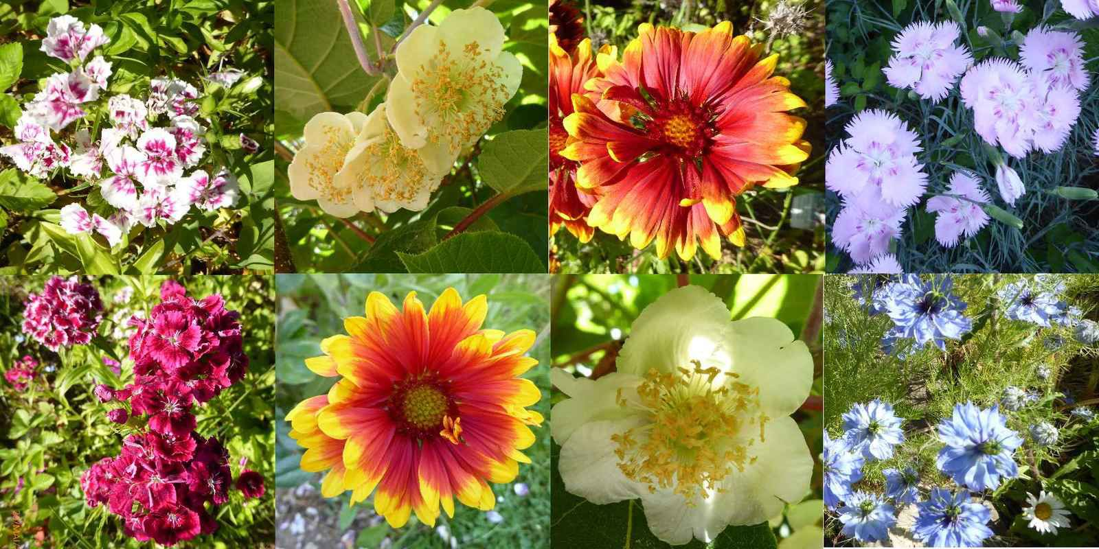 Réalisations et fleurs de juin