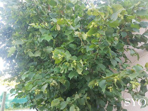 Mes nouvelles plantes: Curcuma et  Fuchsia
